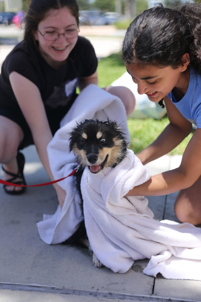 People drying dog with towel